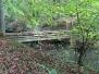 Laufwälder