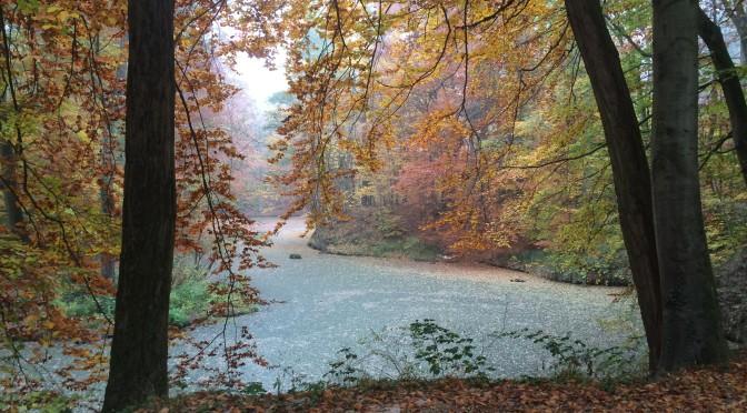Von Waldläufern und Laufwäldern